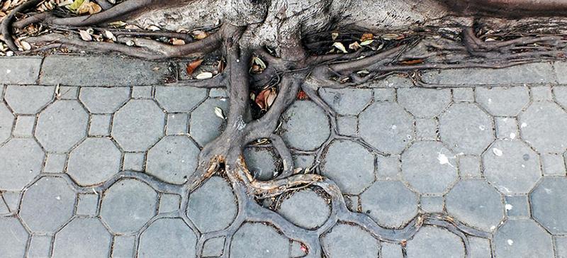 Почему трескается бетон - корень дерева фото